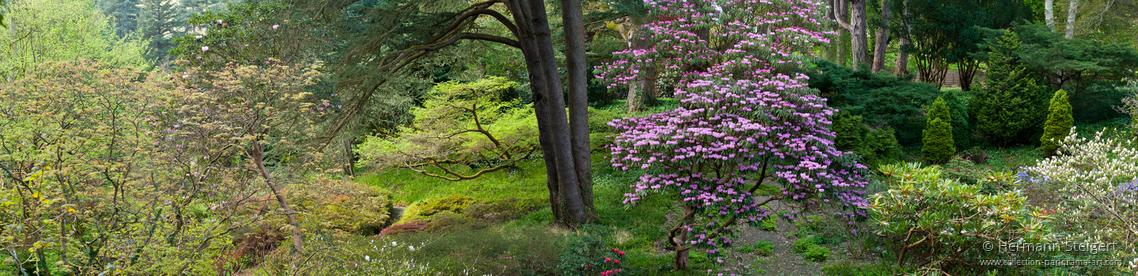 Bodnant Garden 11