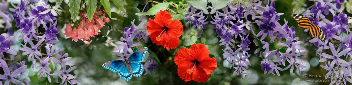 Im Schmetterlingshaus auf der Insel Mainau 1