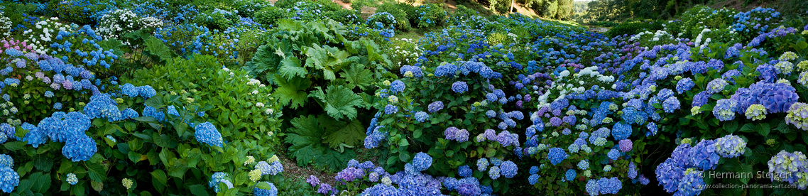 Trebah Garden 12