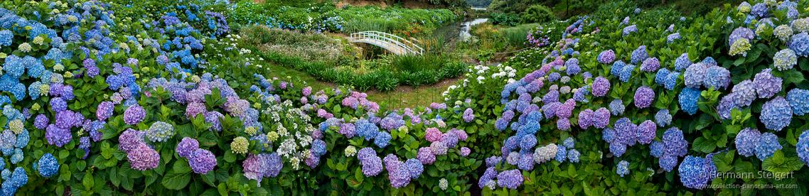 Trebah Garden 2
