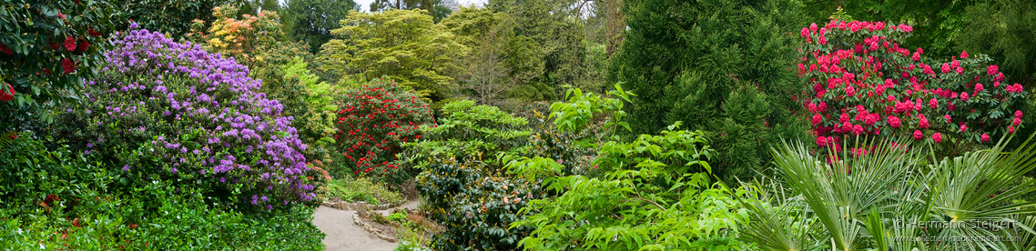 Trelissik Garden 3