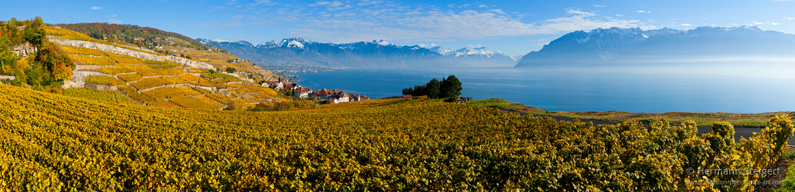 Weinberge am Genfer See 2