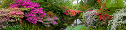 Bodnant Garden 6