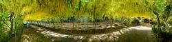 Bodnant Garden 9