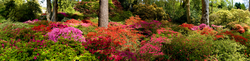 Exbury Gardens 3