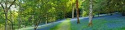 Leonardslee Gardens 2