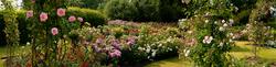 RHS Garden,Wisley 6