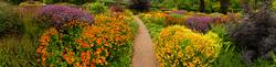 Rosemoor Garden 8