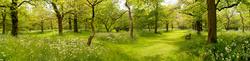Royal Botanic Gardens Kew 2