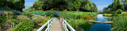 Trebah Garden 1