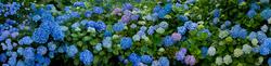 Trebah Garden 8